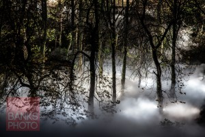 'Fogscape' on the banks of the River Wear. Picture: TOM BANKS
